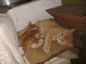 Katzen im Stall