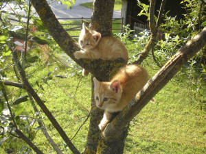 Katzen am Baum
