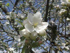 blühende Blumen hinterm Bröcklhof