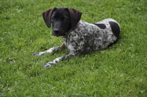 Haushund am Bröcklhof